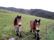 o dia da montanha do cavalo livra bonito Foto de Stock Royalty Free