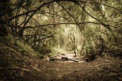 O Dia das Bruxas assombrado Forrest Foto de Stock Royalty Free