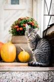 o Dia das Bruxas decorou a porta da rua com as várias abóboras do tamanho e da forma O gato em Front Porch decorou para a ação de fotografia de stock royalty free