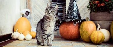 o Dia das Bruxas decorou a porta da rua com as várias abóboras do tamanho e da forma O gato em Front Porch decorou para a bandeir fotografia de stock royalty free