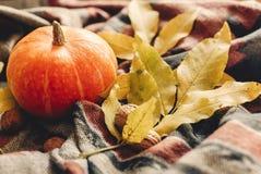 O Dia das Bruxas ou ação de graças feliz abóbora de outono com le colorido Foto de Stock