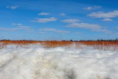 O dia de inverno ensolarado bonito no pântano com três camadas - neve, ramos vermelhos do arbusto, e céus azuis vívidos do saxofo imagem de stock