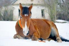 O dia de Patrick do andSt do cavalo Imagens de Stock Royalty Free
