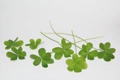 O dia de St Patrick, o dia de St Patrick da Irlanda, trevos, símbolo do dia de St Patrick imagem de stock