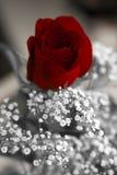 O dia de Valentim feliz aumentou imagem de stock