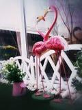 O dia de Valentim feliz do coração dos flamingos do sibilo em terras do jogo Imagem de Stock Royalty Free