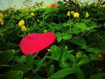 O dia de Valentim feliz do coração em terras do jogo Fotos de Stock