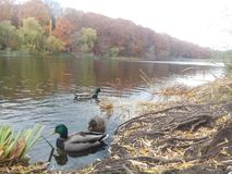 O dia do outono no parque imagens de stock