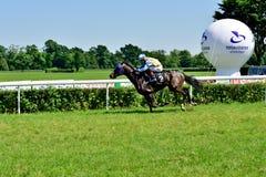 O Dia do presidente na trilha Partenice, raça para o grupo de 3 cavalos dos anos de idade somente III em Wroclaw em Juni 8, 2014 Foto de Stock Royalty Free