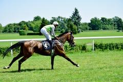 O Dia do presidente na trilha Partenice, raça para o grupo de 3 cavalos dos anos de idade somente III em Wroclaw em Juni 8, 2014 Imagens de Stock Royalty Free