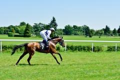 O Dia do presidente na trilha Partenice, raça para o grupo de 3 cavalos dos anos de idade somente III em Wroclaw em Juni 8, 2014 Imagem de Stock Royalty Free