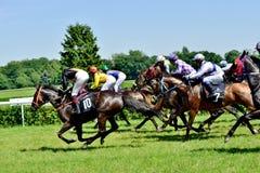O Dia do presidente na trilha Partenice, raça para o grupo de 3 cavalos dos anos de idade somente III em Wroclaw em Juni 8, 2014 Fotografia de Stock Royalty Free