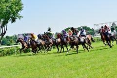 O Dia do presidente na trilha Partenice, raça para o grupo de 3 cavalos dos anos de idade somente III em Wroclaw em Juni 8, 2014 Fotografia de Stock