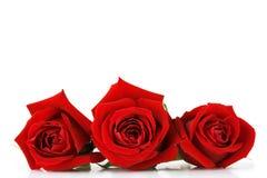 O dia dos Valentim levantou-se Imagens de Stock Royalty Free