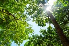 O dia ensolarado da floresta Imagens de Stock