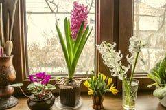 O dia ensolarado da mola na flor da soleira floresce Imagens de Stock