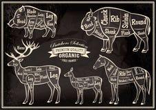 O diagrama do vetor cortou carcaças varrão, bisonte, cervo, cavalo ilustração royalty free