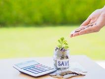 O dinheiro abstrato que salvar a árvore pequena do bebê com frasco de vidro inventa Fotos de Stock