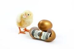O dinheiro chocado dos ovos e da galinha é dourado fotografia de stock