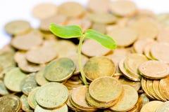 O dinheiro cresce Imagem de Stock