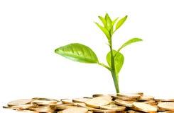 O dinheiro cresce Fotografia de Stock