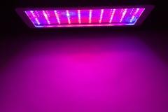 O diodo emissor de luz cresce a luz Fotografia de Stock Royalty Free