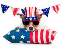 4o do cão do Dia da Independência de julho Imagem de Stock
