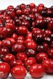 O doce lavou, airela fresco e orgânico Foto de Stock Royalty Free