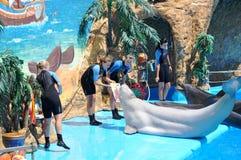 O Dolphinarium Agua potável do Mar Negro e do serviço excelente fotografia de stock