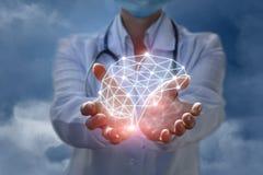 O doutor mostra o modelo do cérebro que pensa nas mãos imagem de stock royalty free