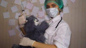 O doutor novo faz a injeção do brinquedo do gato video estoque