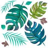 o E Πράσινη ζούγκλα Σύνολο Watercolor στοκ εικόνες