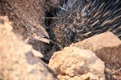O Echidna escava um furo Ascendente próximo dos animais selvagens austrália fotos de stock royalty free