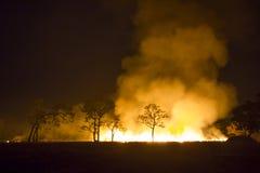 O ecossistema ardente da floresta do incêndio violento é destruído imagens de stock