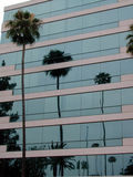 O edifício reflete a palma fotografia de stock