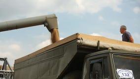 O eixo helicoidal da ceifeira através da tubulação derrama o trigo em um caminhão video estoque