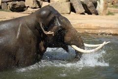 O elefante em um jardim zoológico em Praga, República Checa fotografia de stock