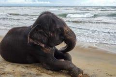 O elefante está encontrando-se na praia tropical do oceano imagem de stock
