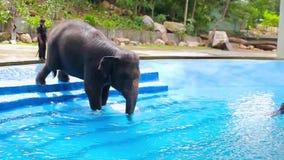 O elefante nas escadas entra na associação com água azul video estoque