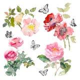 O elemento da aquarela de rosas e de verde do jardim sae com a borboleta no fundo branco Jardim romântico da aquarela Fotos de Stock Royalty Free