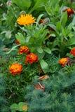 O elemento do projeto da paisagem é um canteiro de flores complexo da combinação Imagens de Stock Royalty Free