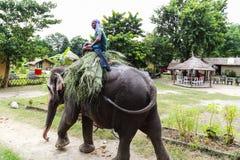 O elepant e o motorista em chitwan, Nepal Foto de Stock Royalty Free