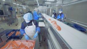 O empregado da fábrica está pondo partes de truta no transportador video estoque