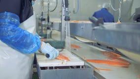 O empregado da fábrica está tomando o tronco dos salmões da correia e está cortando-o vídeos de arquivo