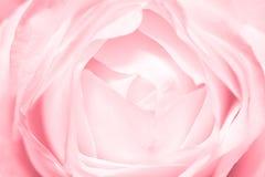 O encarregado cor-de-rosa levantou-se imagem de stock