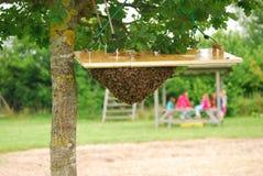 O enxame da abelha cerca uma abelha de rainha Foto de Stock Royalty Free