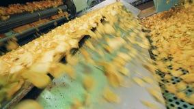 O equipamento fabril move microplaquetas de batata em uma linha especial, facilidade de produção alimentar video estoque