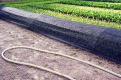 O equipamento usado crescendo os vegetais 2 Fotos de Stock Royalty Free