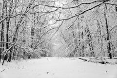 O esclarecimento coberto de neve em uma floresta é um país das maravilhas do inverno Fotografia de Stock Royalty Free
