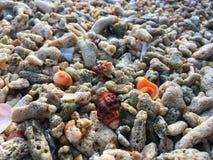 O escudo colorido em corais encalha na tarde da ilha de Tailândia imagens de stock royalty free
